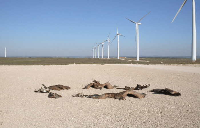 wind-turbines-threat-to-wildlife